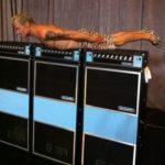 Flea-Acoustic-Rig
